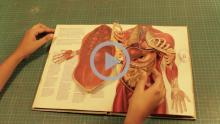 Pop-up Design - Human Anatomy