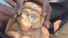 Coconut Sculpting - Bengaluru